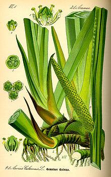 народные травы от паразитов