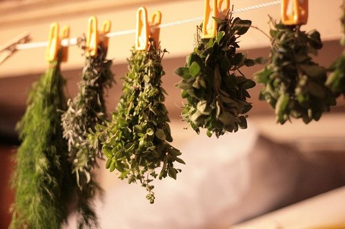 Сушка лекарственных растений